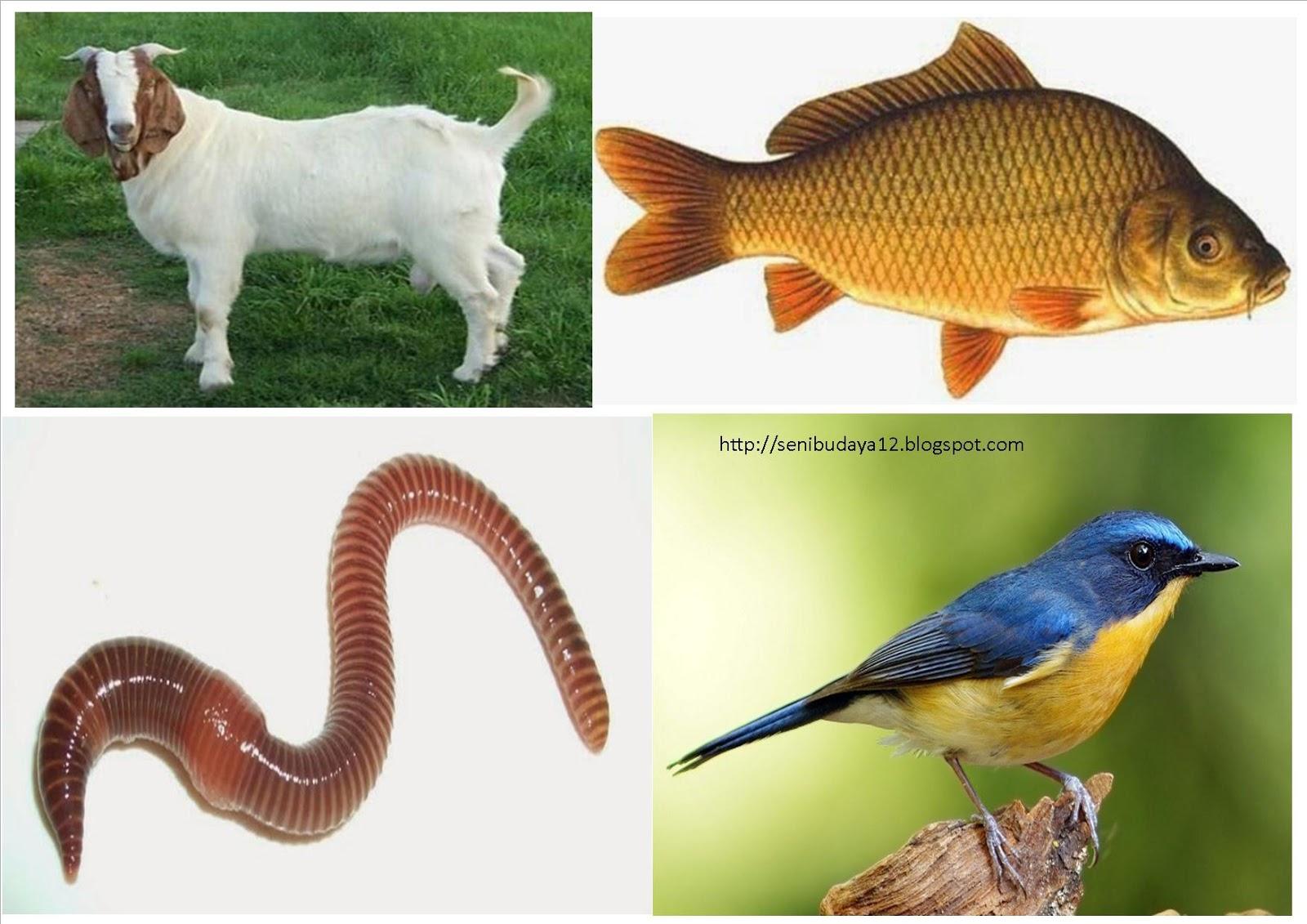 57 Gambar Hewan A Vertebrata Terbaik
