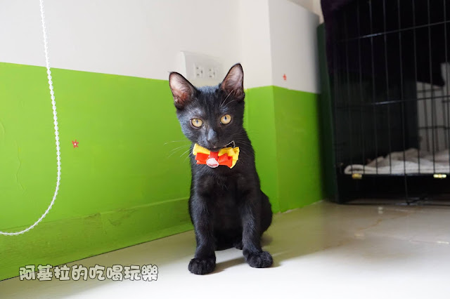 14567484 1099289026791008 3890322309855713957 o - 熱血採訪 朵貓貓咖啡館 - 貓咪餐廳