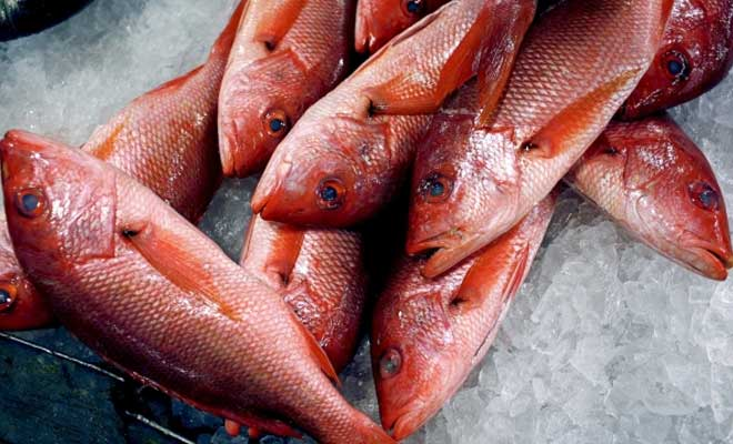 Red Snapper Fish Suppliers - Red Snapper Fish, Red Snapper Fish