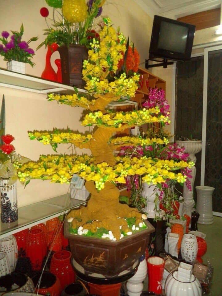Goc bonsai mai dao tai Nguyen Trung Nhan