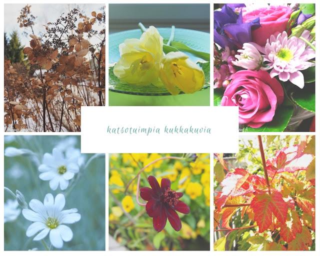 kukkaset pihamaan