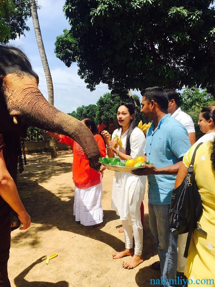 Janaki Wijerathne birthday feeding elephant Uduwe Dhammaloka Thero