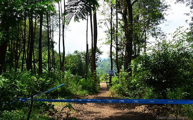 Trek sepeda downhill di Hutan Pinus Ledok Ombo