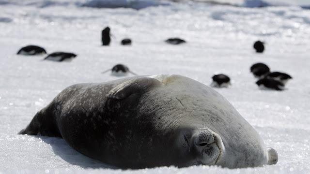 """""""Una bolsa de agua corrosiva"""": alertan de cambios en cascada en el ecosistema antártico debido al CO2"""
