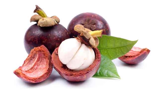 Obat tradisional asam urat dan rematik