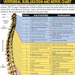 Vertebrae and Their Functions