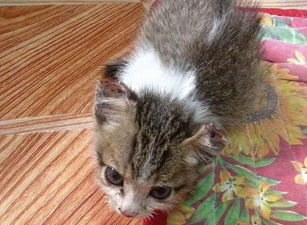 Kejam, Anak Kucing Dijahit Telinga,Mata & Hidung