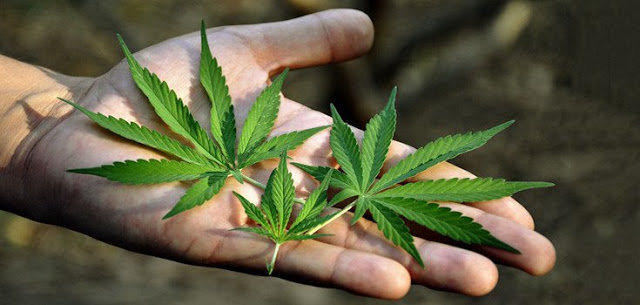 U.S. National Cancer Institute: Marijuana Kills Cancer Cells