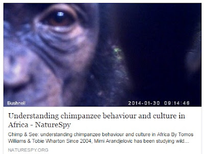 http://www.naturespy.org/2016/05/chimp-see-understanding-chimpanzee-behaviour-culture-africa/