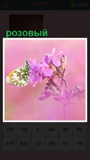 бабочка приземлилась на розовом цветке