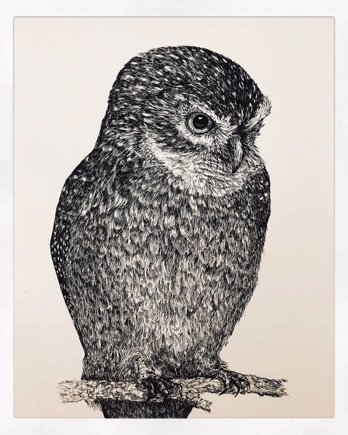 08-Owl-Bas-Geeraets-Black-and-White-Drawings-of-Birds-www-designstack-co