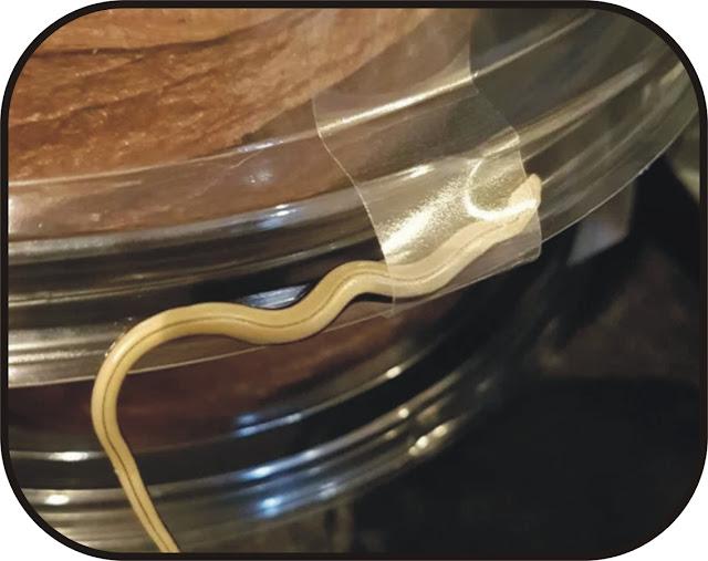 Snake found in ASDA shopping bag