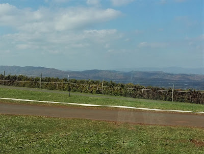 View of the Blue Ridge Mountains from Carter Mountain Orchard