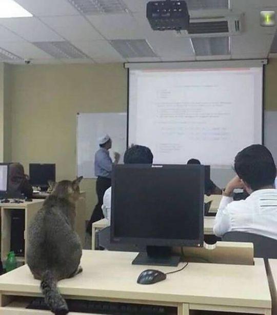 Кот студент