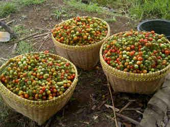 Faktor-Faktor Penting dalam Pengembangan Agroindustri