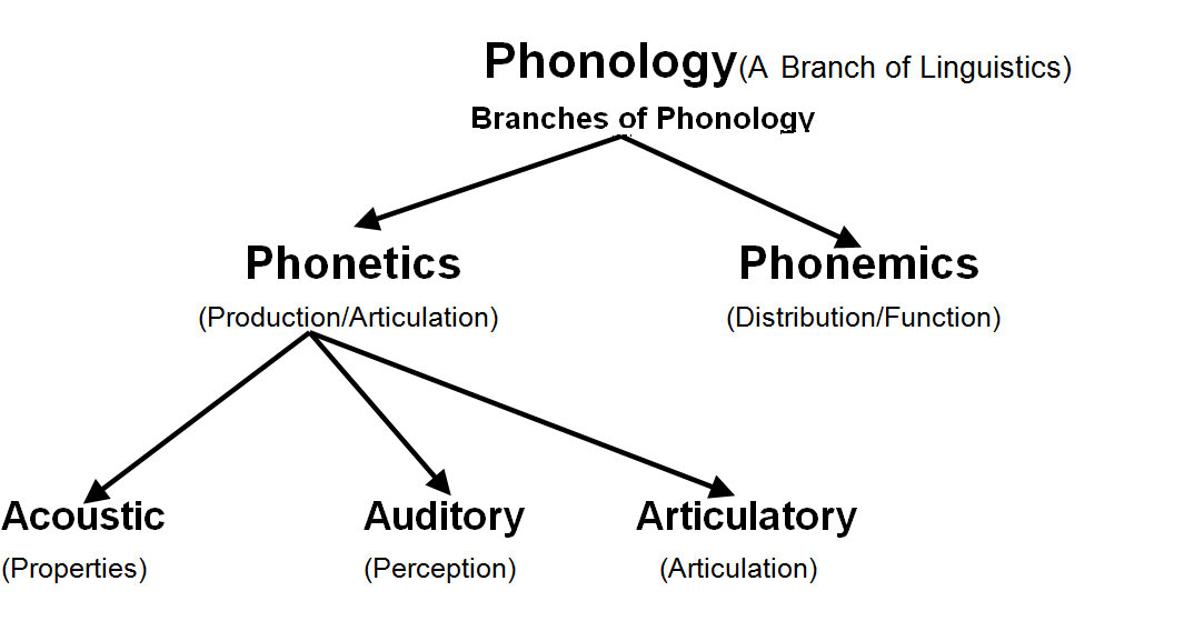 As the terms 'phonetic' and 'alphabet' suggest, the international phonetic alphabet is an if you look closely between the two, you can see that the main differences between the two transcriptions are in. Phonics And Phonology Difference Between Phonetics And Phonology