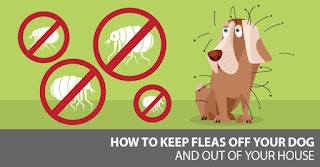 Dog Fleas and Tick Control Methods, Flea remedies for dogs, Dog flea medication