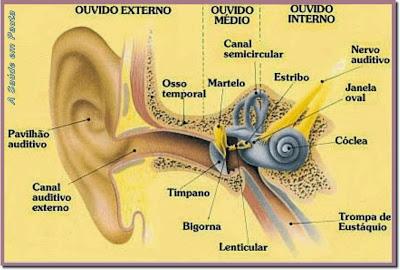 Esquema geral do ouvido mostrando a localização do ouvido externo, do ouvido médio e do ouvido interno