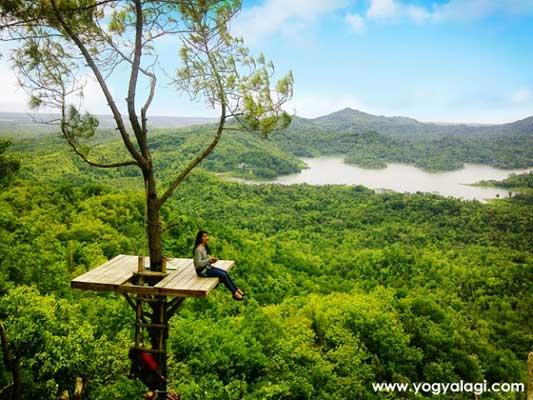 Wisata Alam Hutan Kalibiru Kulon Progo Yogyakarta
