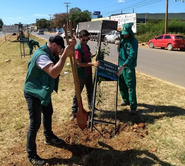 Secretaria Municipal de Meio Ambiente inicia plantio de mudas nas avenidas centrais de Barreiras