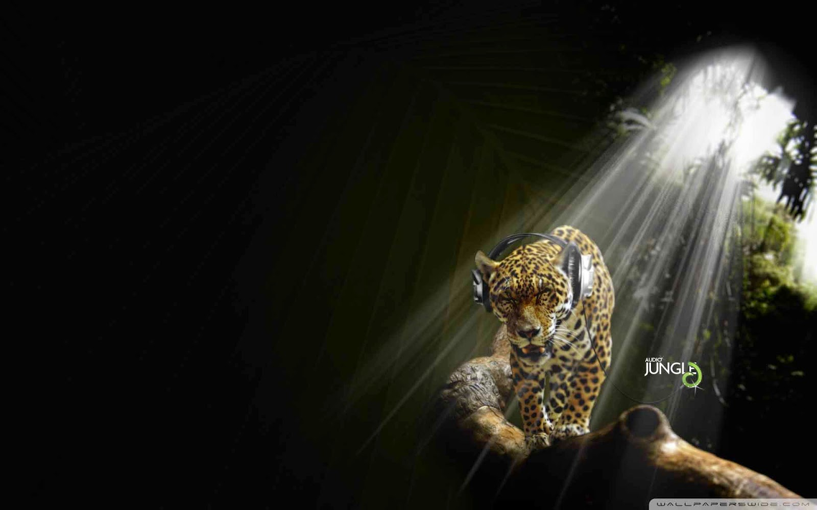 Hd Animal Wallpapers Hd Music Wallpapers: Terriod: Animals HD Wallpapers