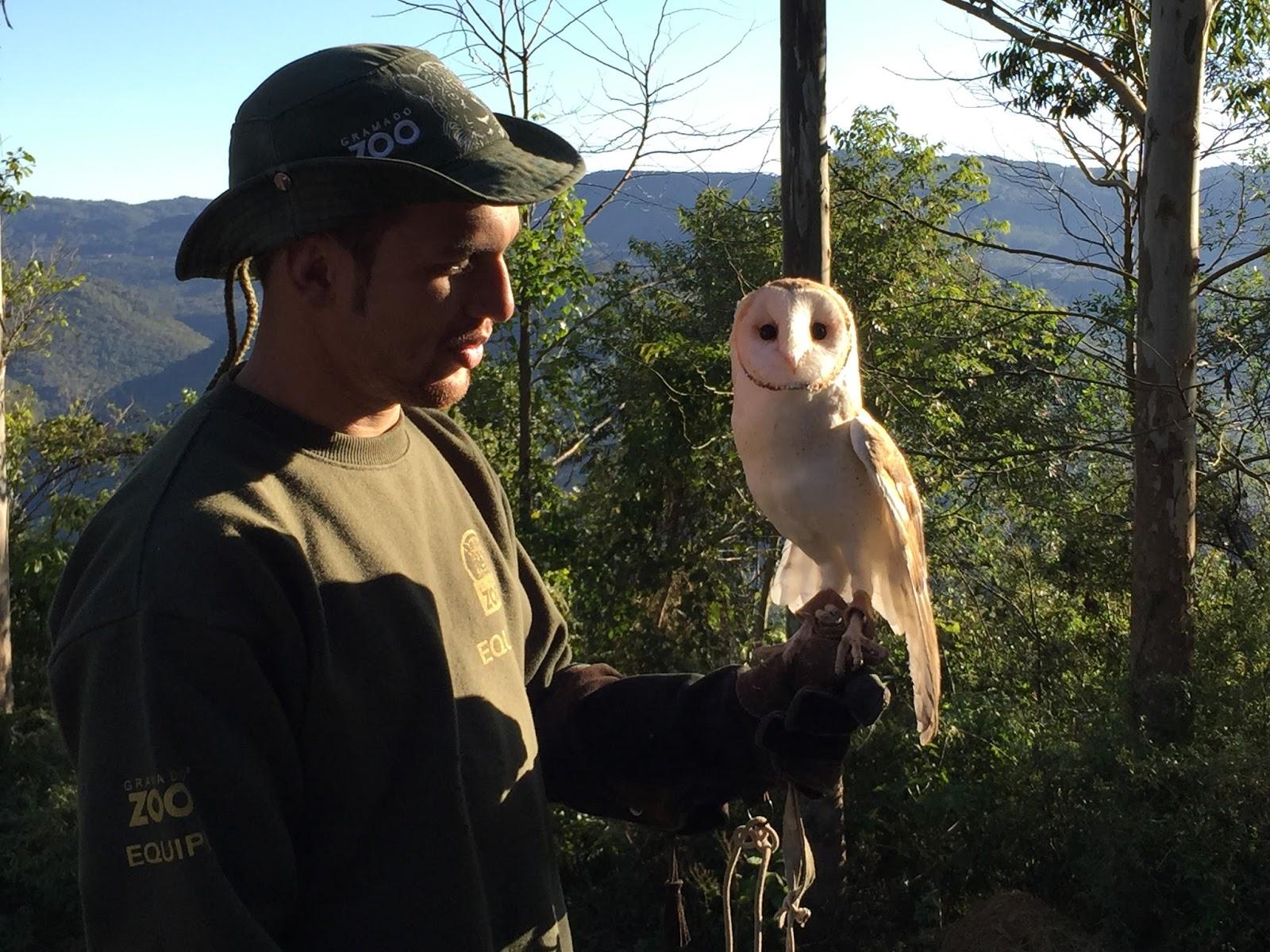 coruja no zzo de Gramado