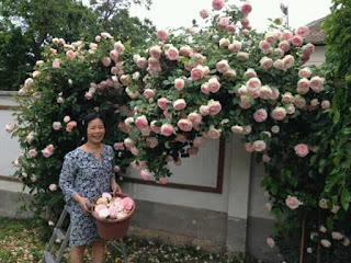 vườn hoa hồng đẹp