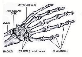 www.padippu.lk: Bones