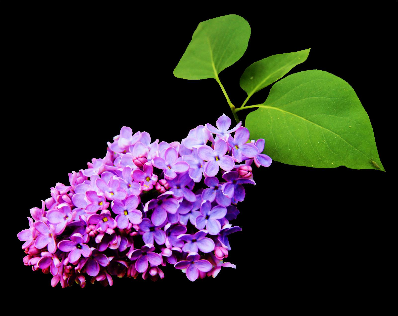 Cosas Para Photoscape Flores Y Plantas Arboles Ps: MARCOS GRATIS PARA FOTOS