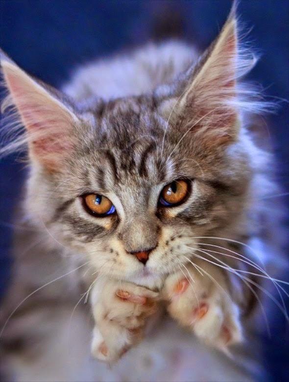 fotografias de gatitos
