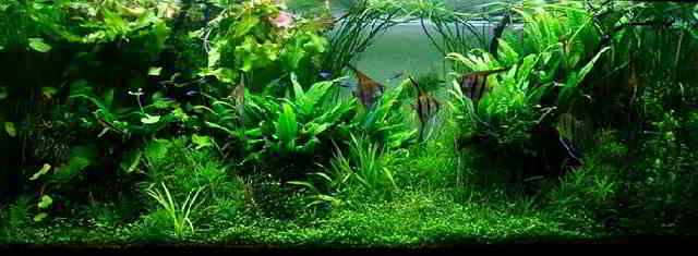 How To Aquascape A Freshwater Aquarium For Beginners