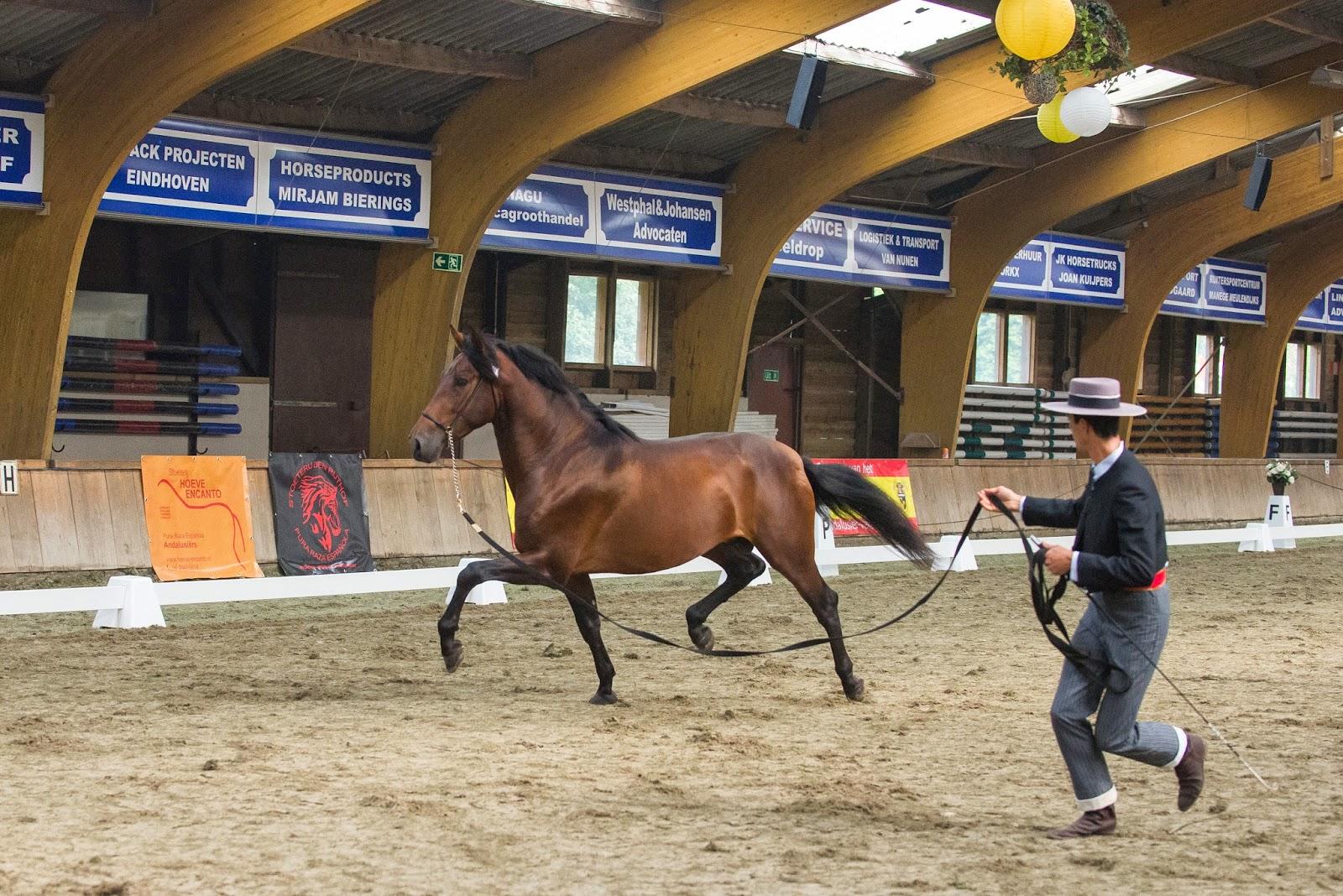 paard in beweging