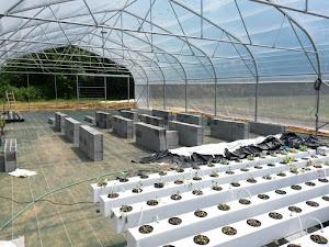 Gunakan Plastik Uv 14% Untuk Budidaya Flora Dalam Greenhouse