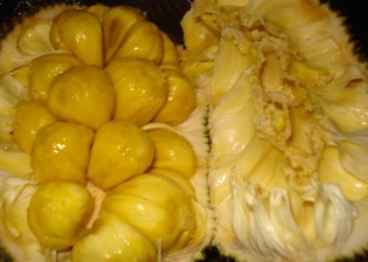 contoh gambar mewarnai buah nangka