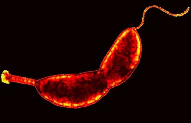 Bí ẩn về 10 loại vi khuẩn có siêu năng lực khó tin