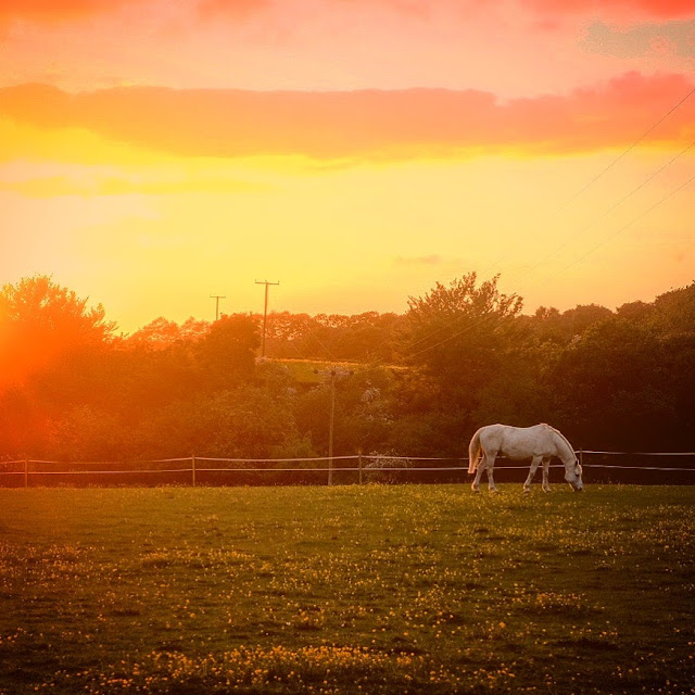 Horse at sunset, this is the week of change, be the change, mandy charlton photography, newcastle photographer, blogger, writer
