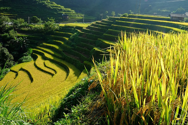 The Ideal Rice Viewing Itinerary In Sapa 2