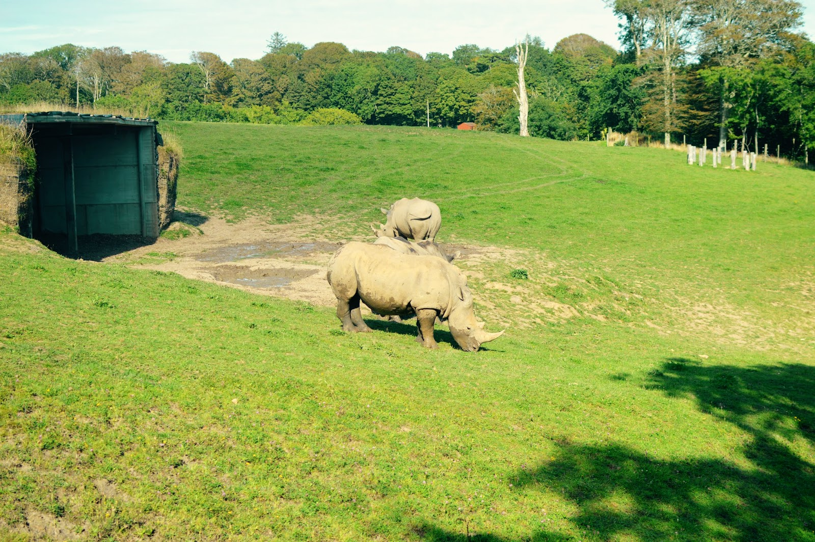Manor Park Anna's Welsh Zoo Rhino