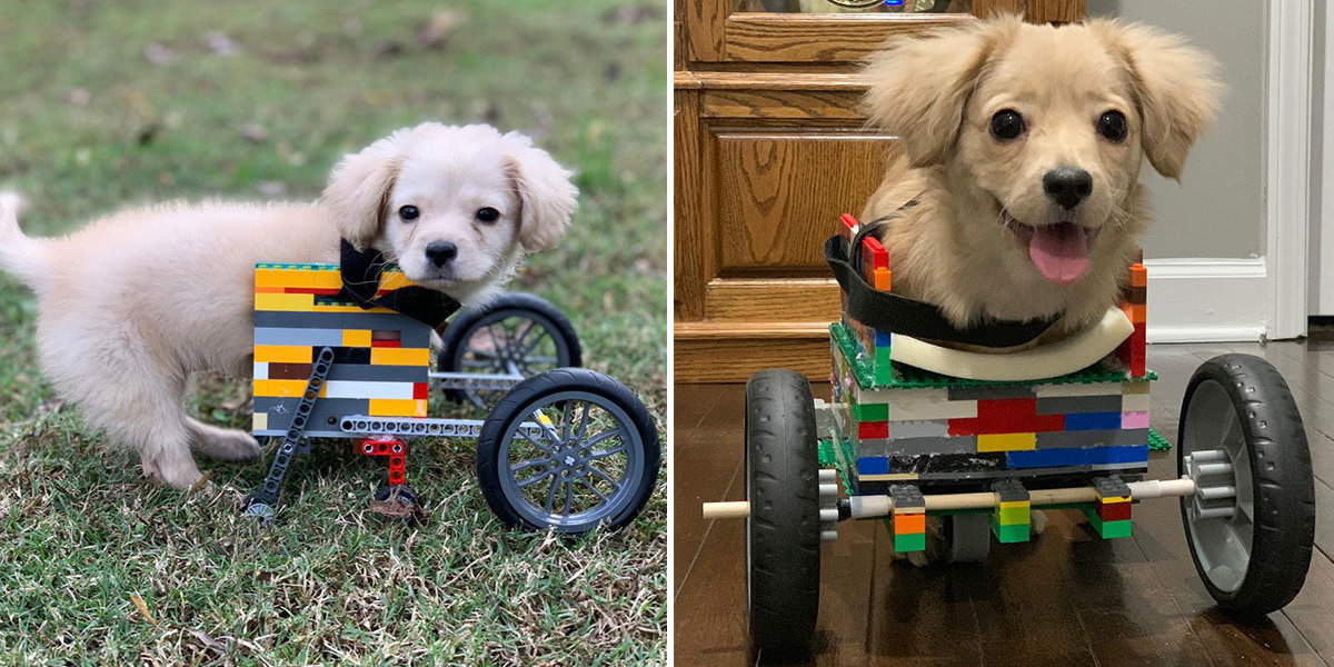 Two-Legged Dog Got A Wheelchair Built Out Of Legos By A 12-Year-Old Boy