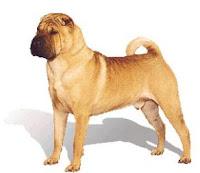 raza de perro shar pei