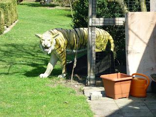 tigru in gradina cuiva in apropiere de Posthof
