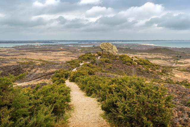 Studland Bay vista of Agglestone and surrounding heathland with gorse bushes and path