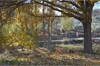 turismo-rural-sendero-paisaje-el-burgo-sierra-de-las-nieves-malaga