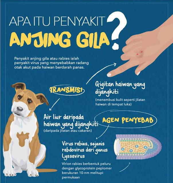 apakah penyakit anjing gila(rabies)?