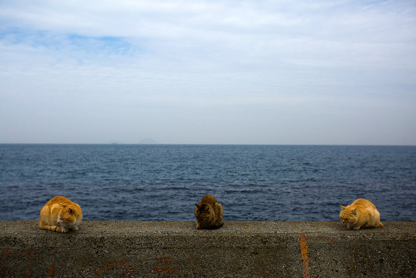 cats japan aoshima