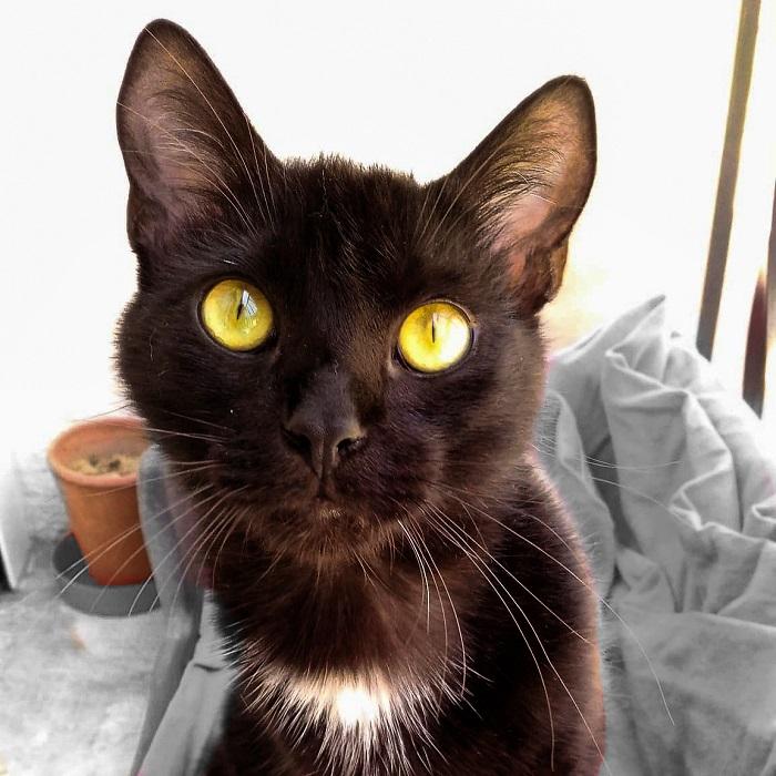 Photo de Cézanne, grand chat noir, sur le balcon, Hello c'est Marine