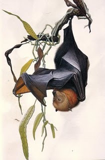 Lesser Mascarene flying fox