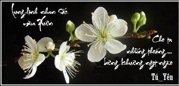 Thơ Tú_Yên - Mùa Xuân 95mxuan