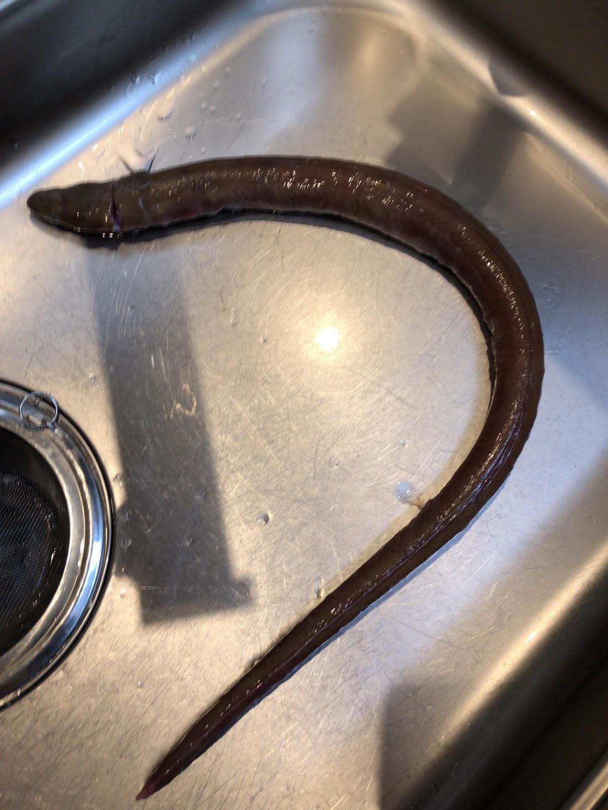 料理 ウミヘビ