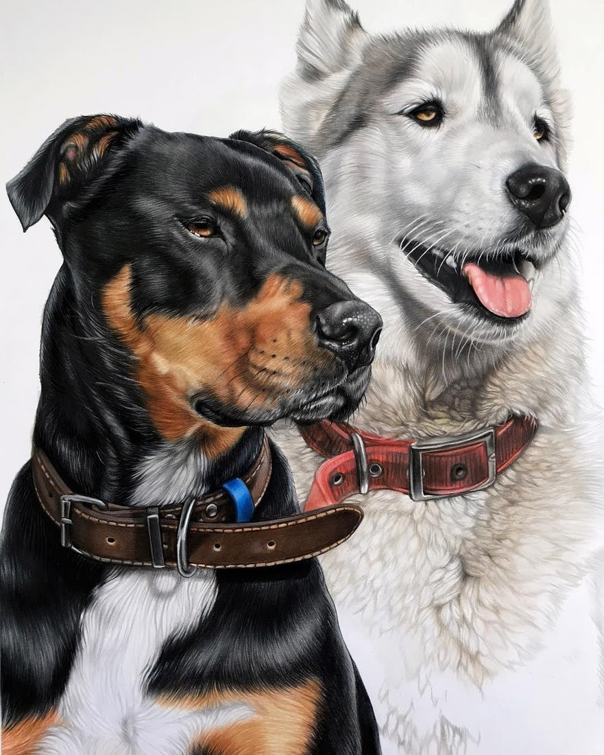 01-Pups-from-New-Zealand-Kelly-Lahar-Our-Furry-Companions-in-Animal-Drawings-www-designstack-co